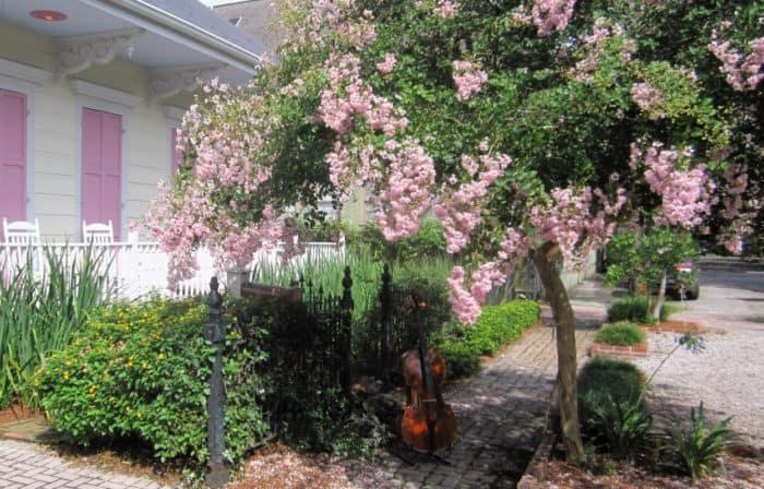 cello-lombardi-pink-tree